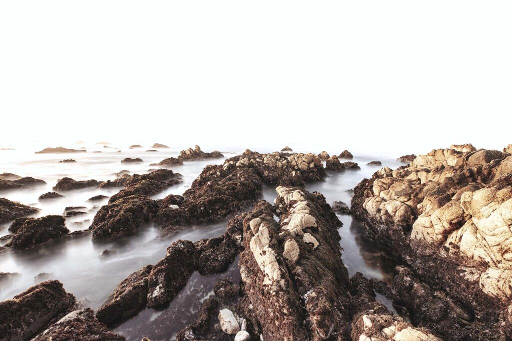 Photograph taken by Nick tort at Point Lobos
